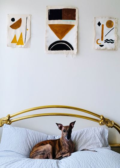 Portrait of a dog on bed