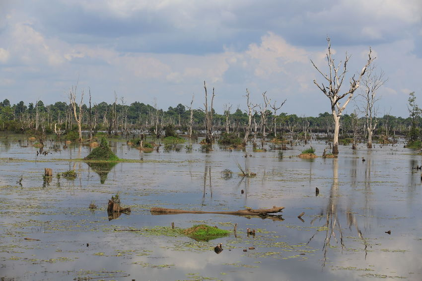 neak pean in Cambodia Cambodia Lakeview Neak Pean Pond Reflection Scenary Swamp Beauty In Nature Day Dead Wood Flooding Jungle Lake Landscape Nature Neak No People Outdoors People Pond Life Southeast Asia Summer Surface Level Tranquil Scene Water