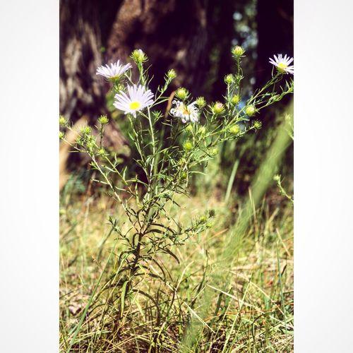 цветы мои фото учусьфотать Vscocam фотолюб Likeforlike MyPhotography Nice Природа Taking Photos
