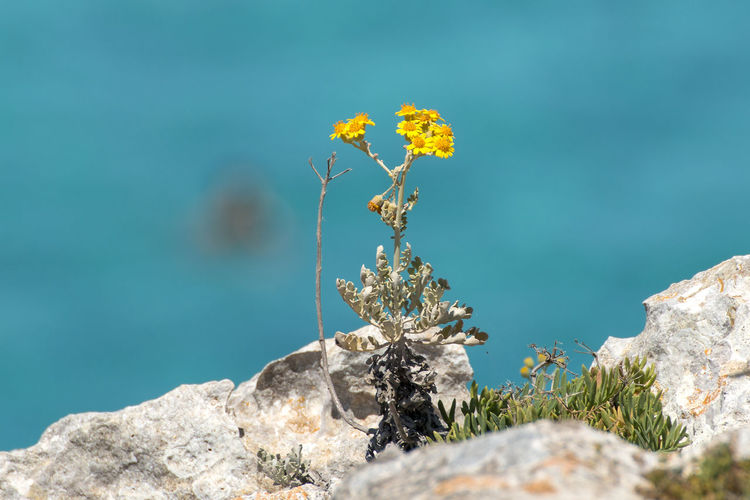 Close-up of plant on rock against blue sky