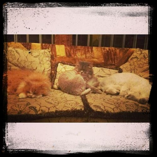 Our Cats Milou, Pootchie, & Ikki taking over the couch at Home Sweet Home in Lebanon