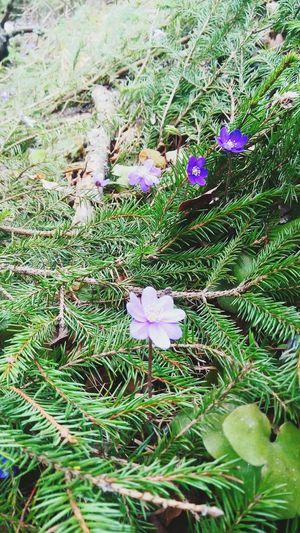 Красота! Flowers