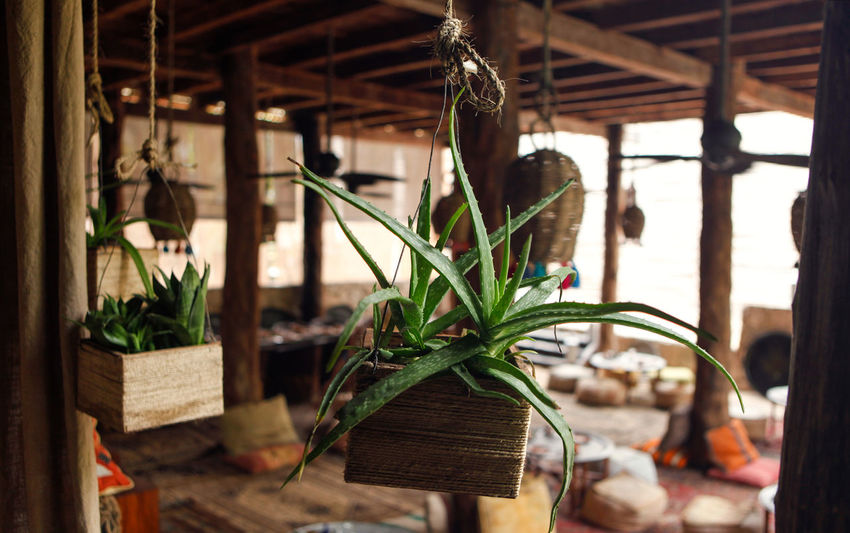Calm Mexico Close-up Freshness Indoors  Nature Plant Potted Plant