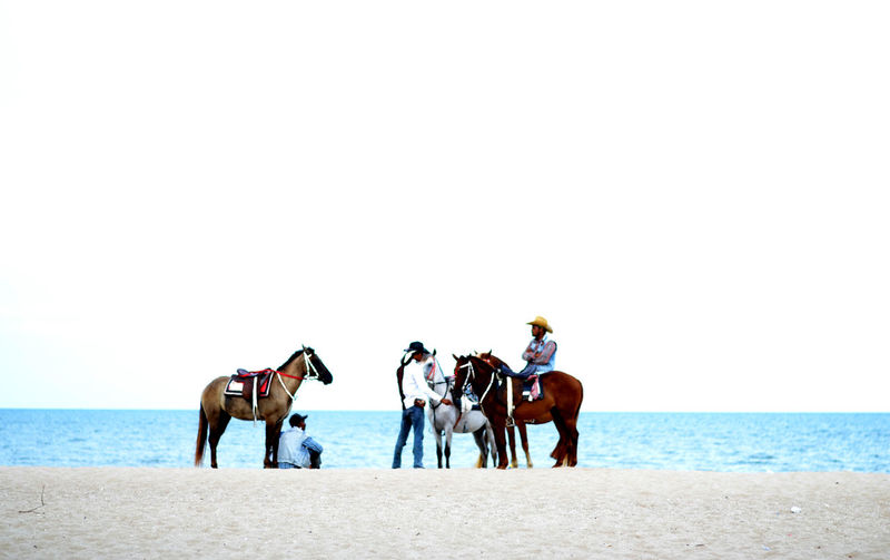 People riding horse on beach against clear sky