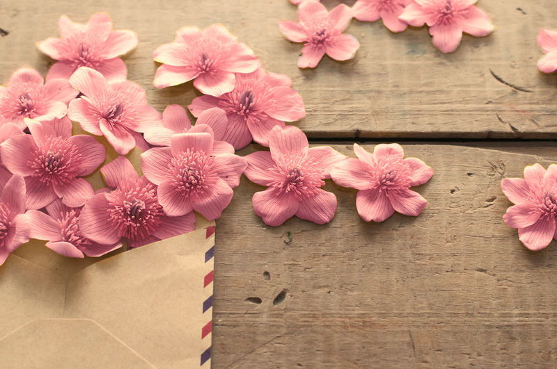 High angle view of pink flowering plants on table