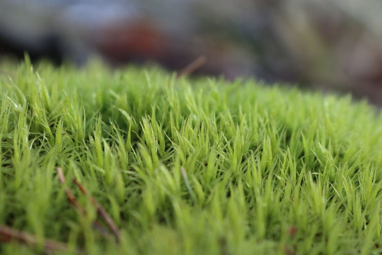 🌿🔥🙈 Small Small_world Flowers Flower Green Landscape Tree Forest Beauty In Nature Beatiful Nature Nature Green Diffrentperspective Nature Photography Leaf Beauty Field Close-up Grass Green Color Farmland Farm Grassland Agricultural Field Crop  Growing