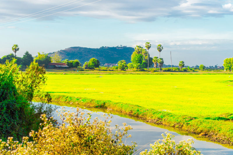 Phnom Krom across the Rice Field. Cambodia Phnom Krom Siem Reap Agriculture Beauty In Nature Cloud - Sky Day Field Grass Green Color Growth Landscape Nature No People Outdoors Rural Scene Scenics Sky Tranquil Scene Tranquility Tree Water