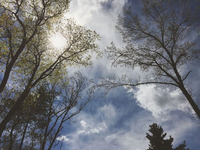Low Angle View Tree Sky Beauty In Nature Nature Branch Day No People Outdoors Cloud - Sky Growth Scenics