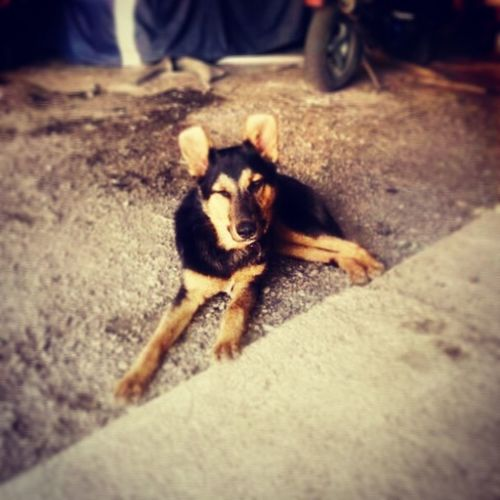 Der beste Hund der Welt:D I Love My Dog First Eyeem Photo