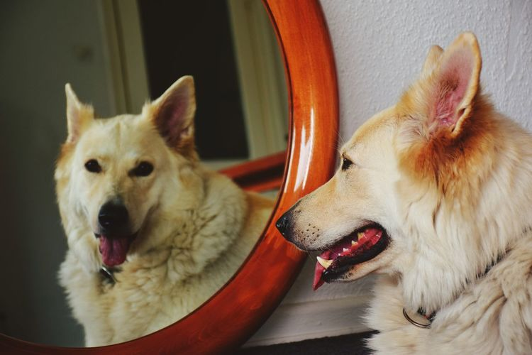 Reflection portrait of dog in mirror
