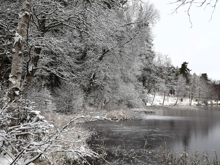 The lake is freezing Frost Cold Frozen Lake Winter Lake Daily Walk Nature Beauty In Nature Shades Of Grey Sognsvann