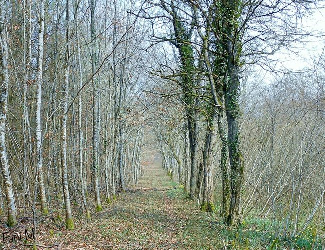 Footpath passing through forest