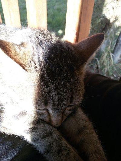 Masum Tatli en guzel Kedicik artik onun adi Minnok Cat