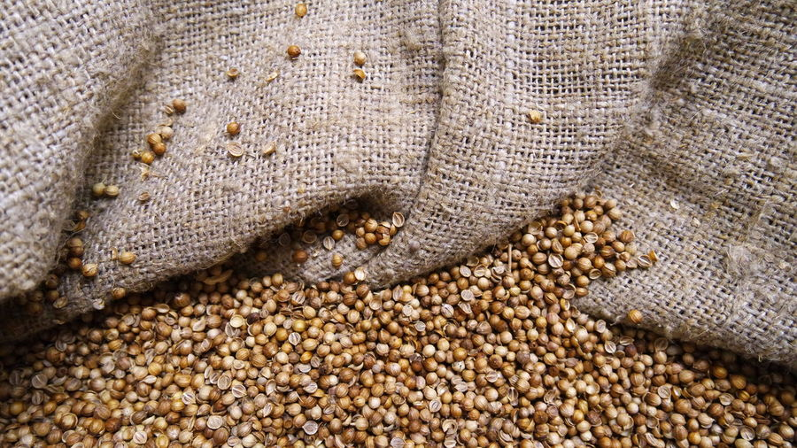 Coriander Seeds In Jute Sack