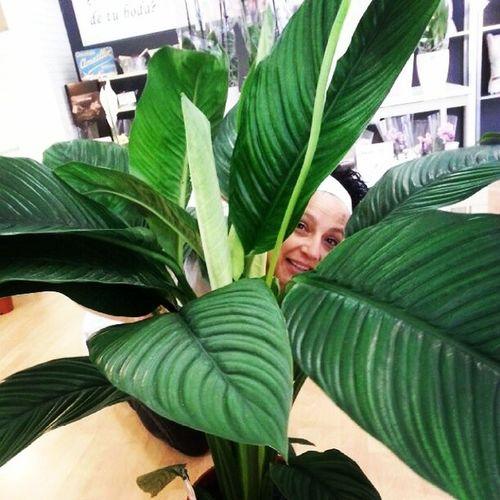 Mañana con una amiga que se coló en una planta. Vigo Flores Aleafloristerias MOMENTAZOSDELAVIDA Flores Amistad