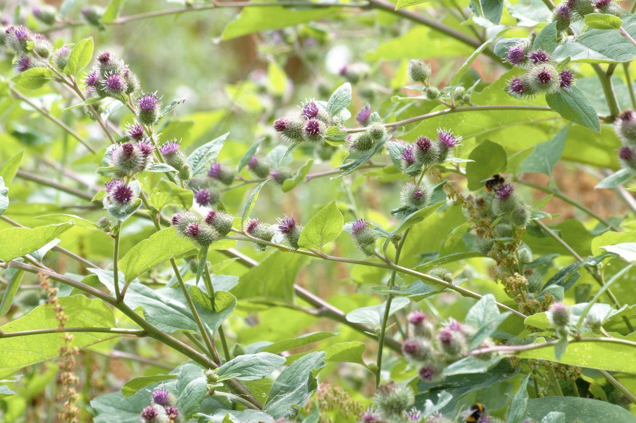 Buds Growing On Field