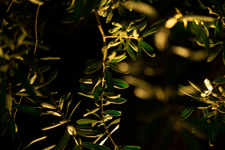 Plant leaf in night time Plant Growth Nature Plant Part Close-up Leaf Green Color No People Beauty In Nature Focus On Foreground Tranquility Outdoors Selective Focus Vulnerability  High Angle View Freshness Spiky Leaves Fragility Night Night Photography Low Light Illuminated Flowers At Night