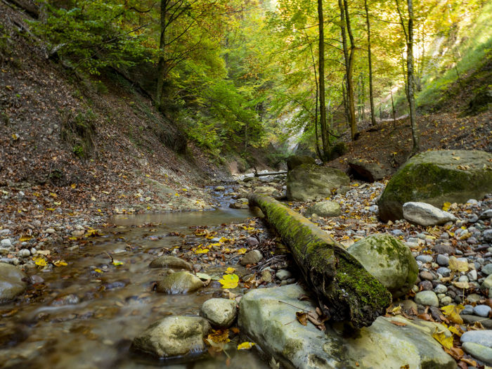 Flowing Forest Plant Tree Nature Water Land Stream - Flowing Water No People Beauty In Nature Moss Tranquility Solid Outdoors Scenics - Nature Rock Flowing Water Tranquil Scene Plant Part WoodLand Flowing Pollution Switzerland Cholereschlucht Nature