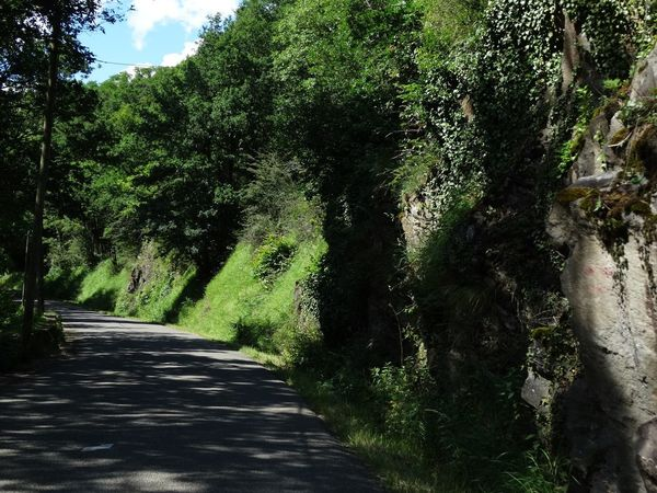 French road France Tree Plant Growth Nature The Way Forward Sunlight Beauty In Nature Green Color Direction No People Shadow Tranquility Day Land Outdoors Lush Foliage Foliage Road