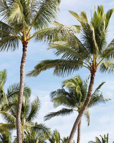FBF  | 🌴🌴🌴 . . . Alohafriday Pauhana Palmtreeperspective Islandstyle Oahu Hawaiinei Hivibes Beachlife Flickrfiles Canon7d  Travelphotography Wanderlust