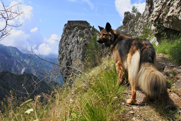 View of dog sitting on rock against sky