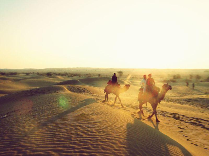 Deserts Around The World Rajasthan Jaisalmer Camel India