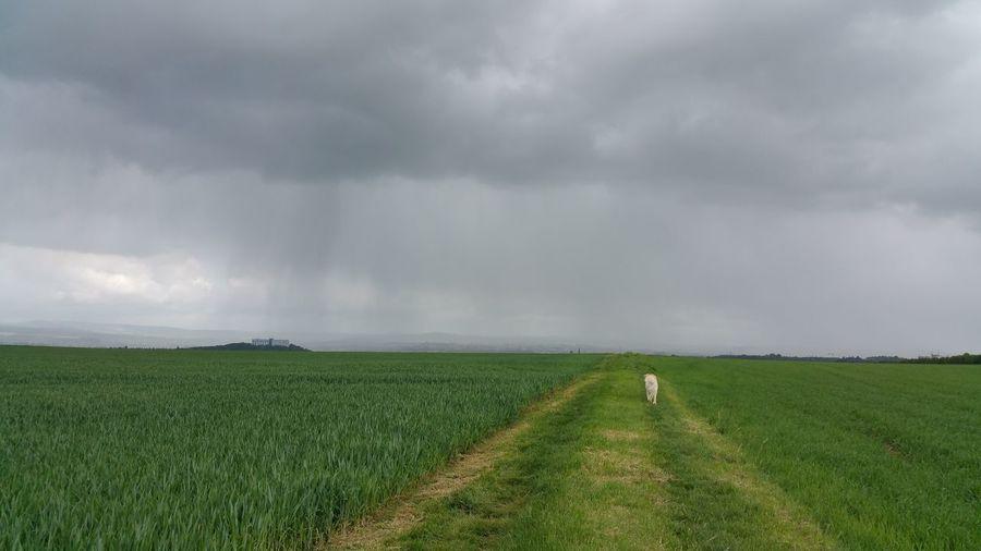 Animal on vast field