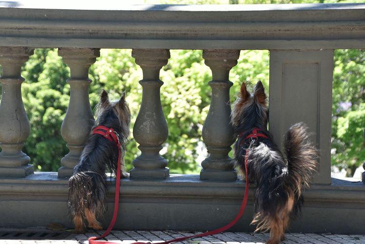 Rear view of dogs peeking through railing