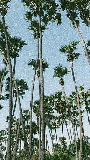 Tree Plant Growth Sky Low Angle View No People Palm Tree