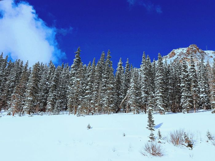 Winter Tranquility Tranquil Scene Colorado Photography Ski Travel Destinations Bird Flying Flock Of Birds Pixelated Blue Sky Rocky Mountains Countryside Scenics Snowcapped Mountain Snow Covered Snow Snowfall Snowcapped Snowcapped Mountain Range Foggy