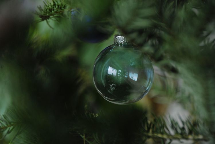 Close-up of electric bulb on christmas tree