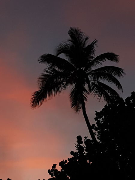 Palm Tree Sunset Tree Sky No People Outdoors Nature Day