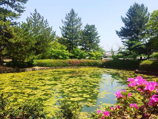 法隆寺 鏡池 horyuji kagami ike