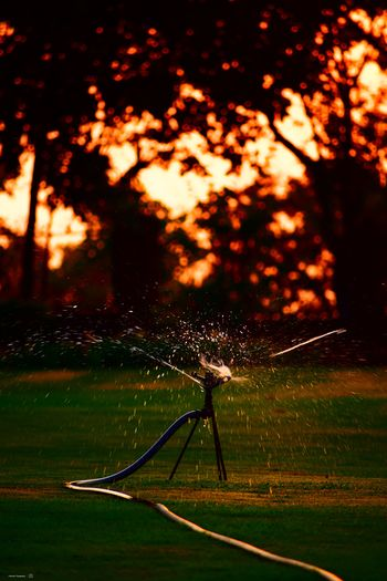 Clicked On Nikon D3300 Garden Lawn Sunset Green Color Orange Color Beauty In Nature Pipe Water Drops Of Water Wet Lawn Evening Sunset No People Sprinkler Watering Drop Garden Hose