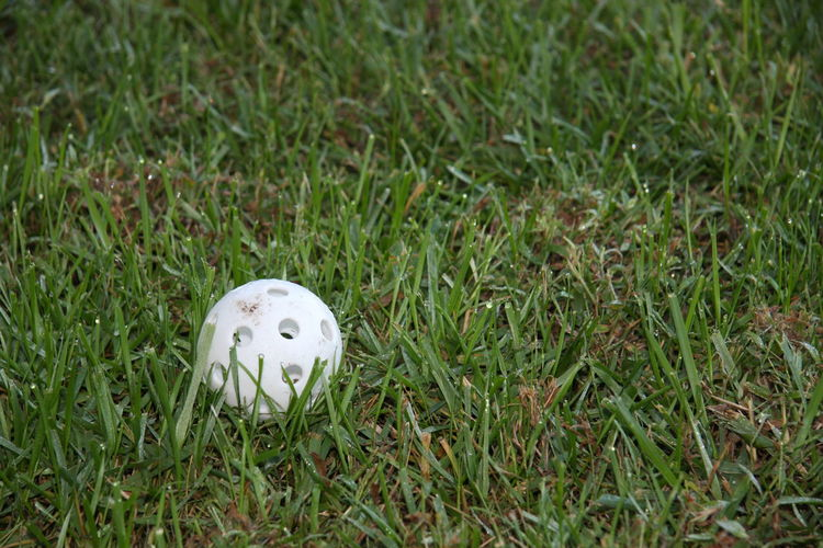 Grass Green Color Plant Land White Color Field Nature No People Ball Day High Angle View Sport Growth Close-up Outdoors Single Object Selective Focus Golf Focus On Foreground White Wiffleball Baseball