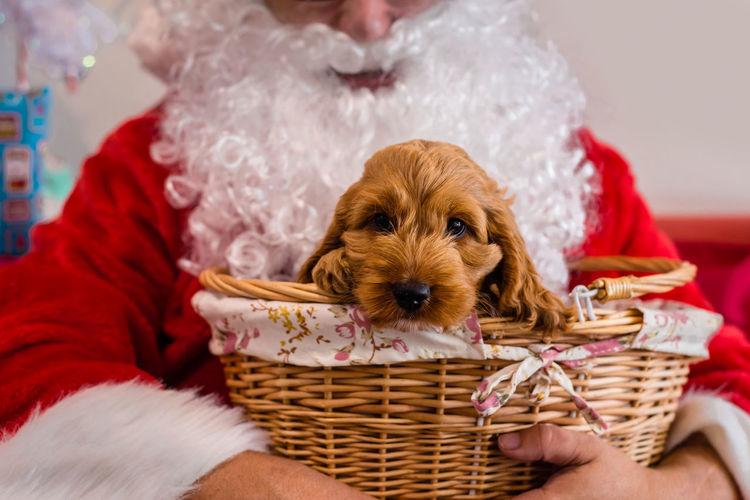 Portrait of dog in basket
