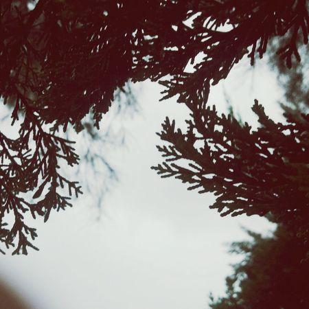 Taking Photos Garden Photography This Morning