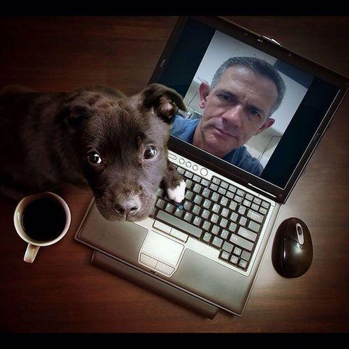 Meus efeitos fotográficos com o aplicativo Pho.to Lab Photolab Smartpuppy Pet Animal Morphing