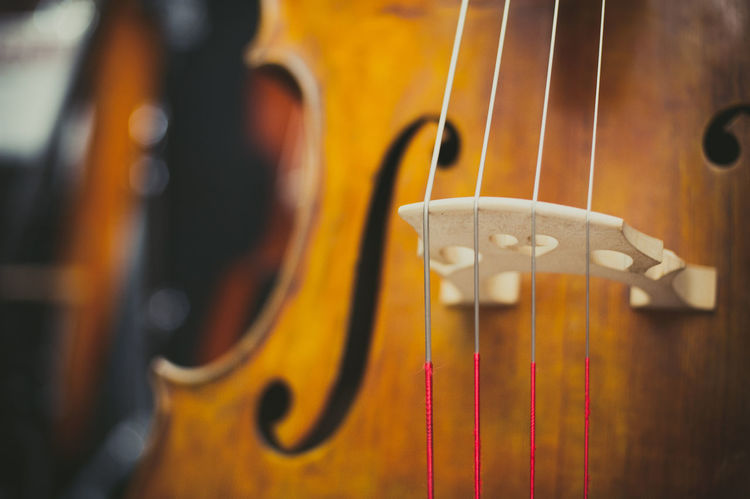 Double bass wooden body part Chords Double Bass Music Musical Instrument Selective Focus Shop Showroom Sound Store String Stringed Instrument Strings Wooden