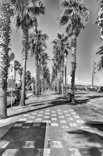 BARCELONA - AUGUST 10: Scenic bike lane bounded by palm trees along Barceloneta beach, Barcelona, Catalonia, Spain, on August 10, 2017 Tree Plant Direction The Way Forward Nature Road Sunlight Shadow Sign No People Day City Street Sky Footpath Palm Tree Architecture Transportation Outdoors Diminishing Perspective Treelined Long