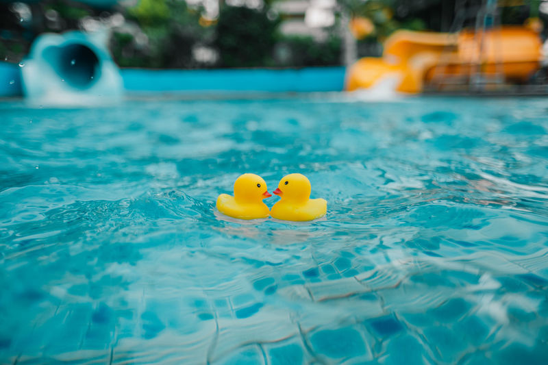 Close-up of yellow duck floating in swimming pool