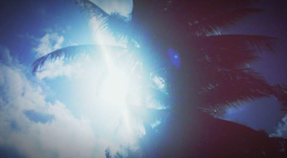 Beach Trees Trees And Sky