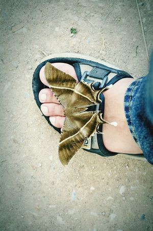 Moth Fashion Nature Collection Whats On Your Feet