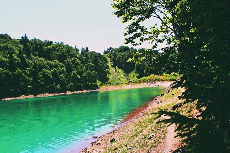Lake Mtsvane Tba მწვანე ტბა ხულო Nature Tree Water
