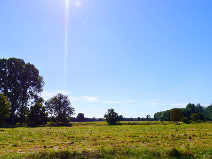 Beauty In Nature Clear Sky Day Field Grass Landscape National Trust National Trust 🇬🇧 Nature No People Outdoors Oxburgh Hall Scenics Sky Tranquil Scene Tranquility Tree Vapor Trail