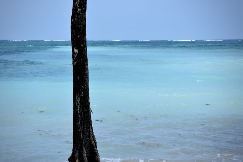 Beauty In Nature Blue Calm Horizon Over Water Nature Ocean Tree Trunk Turquoise Water