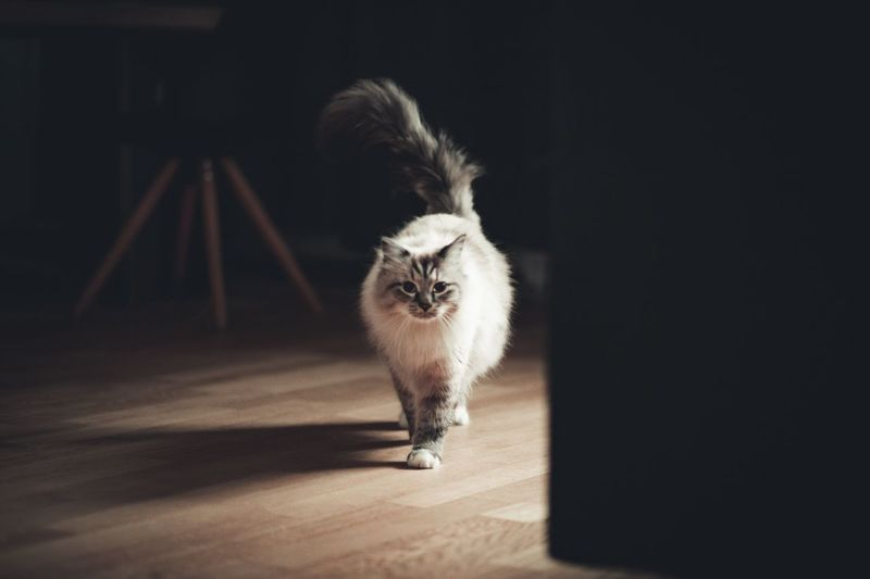Ready to walk the world ♥️ Animal Photography Canon Catoftheday Cat Lovers Cats Of EyeEm Cats Cat One Animal Domestic Animals Domestic Pets Canine Dog Shadow Indoors  Portrait EyeEmNewHere Autumn Mood