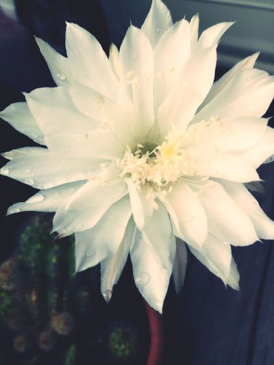 Flower Head Flower Petal Close-up Plant