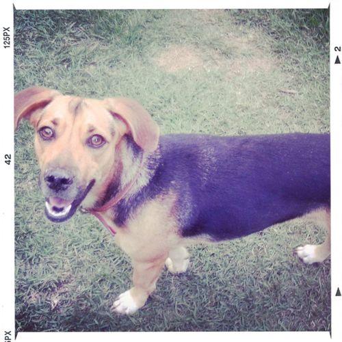 pricisinha Alitha. I Love My Dog
