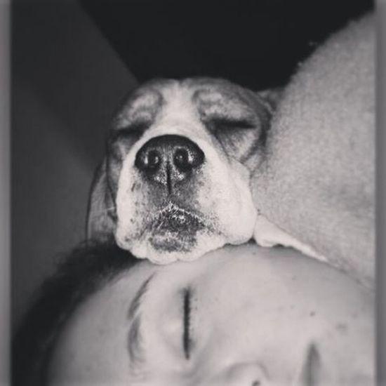 Puro amor! Mailoferrer Mailove Maimor Amomiperro Amorporlosanimales Amorperruno Amorincondicional Sleep Dreams